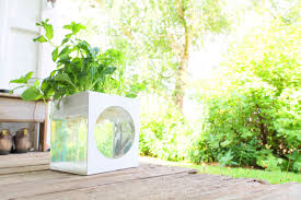 aquarium garden kit u2013 self cleaning fish tank grows plants
