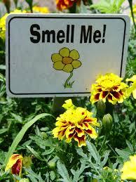 Fragrant Plants Florida - fragrant plants garden housecalls
