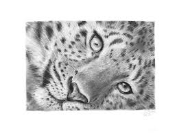 leopard pencil drawing by carlsyres on deviantart