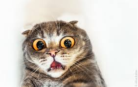 Scared Cat Meme - psbattle surprised cat melissa who can t believe what she just saw