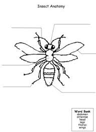 insect body parts body parts insects and worksheets