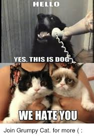 Grumpy Cat Yes Meme - hello yes this is dogl we hate you join grumpy cat for more