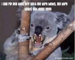 Koala Bear Meme - koala bear birthday memes memes pics 2018