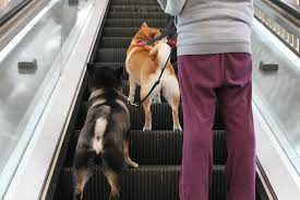 permission to ride a guide to dog friendly public transportation