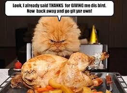 Thanksgiving Funny Meme - funny thanksgiving whatsapp memes