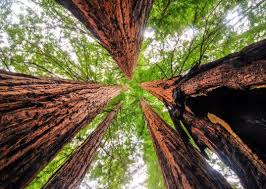 scientists discover trees are better at absorbing carbon