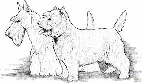 coloring page of dog newcoloring123