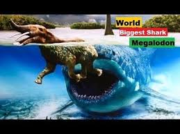 biggest megalodon shark top 10 unbelievable facts about megalodon biggest shark ever by