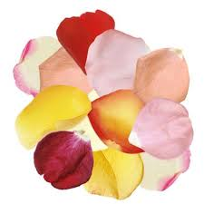 fresh petals fresh petals fresh flower petals petal weddings