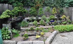 benches bonsai eejit