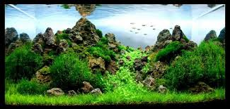 amano aquascape awesome amano planted tank aquascape ideas