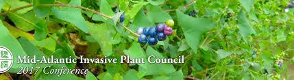 native pennsylvania plants morris arboretum of the university of pennsylvania invasive