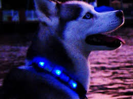 light up collar amazon spot your dog at night with light up dog collar coolgiftsreview
