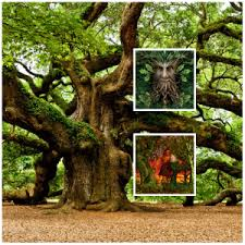 start of oak celtic tree month last s and last