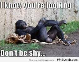 Funny Monkey Memes - 5 monkey with big balls meme pmslweb