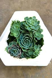 succulent wall planter u2013 bodrumtemizlik site