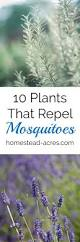 10 plants that repel mosquitoes homestead acres