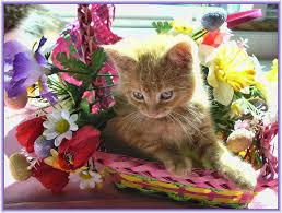 bunny rabbit home decor cute easter kitty cat kitten in home garden art decor with u2026 flickr