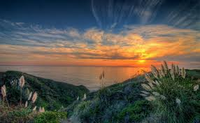 pampas grass sunset half moon bay ca hdr photo by keith cuddeback