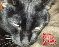 evil satanic cat u0027 strikes back on craigslist u2014 for those slow to