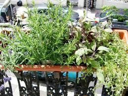krã uter balkon arctar küche fensterbank kräuter