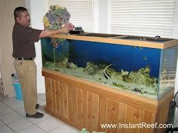 aquarium decorations decoration designs guide