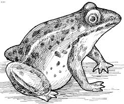 tadpole coloring page frog coloring page kids website for parents