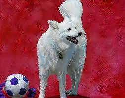 american eskimo dog dallas custom dog art american eskimo