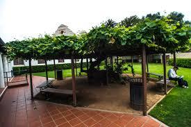 Grape Vine Pergola by Recreation Center Grapevine Arbor Park San Gabriel Ca