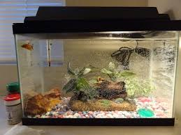 Betta fish tanks and plus small aquarium for betta fish and plus