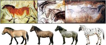 Are Horses Color Blind Cave Paintings Showed True Colors Of Stone Age Horses Wired