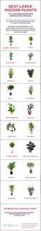 33 best plants for birds white bird of paradise indoor plant care u2013 best bird 2017