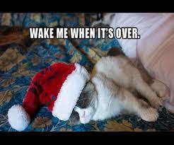 Grumpy Cat Memes Christmas - 2012 s best of grumpy cat christmas gallery ebaum s world