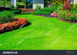 green lawn front lawn backgroundgarden landscape stock photo