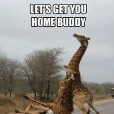 Drunk Giraffe Meme - drunk giraffe by srle meme center