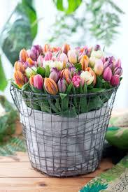 51 best u0026tulp images on pinterest floral arrangements flower