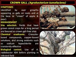Viroid Diseases In Plants - apple diseases by sajad