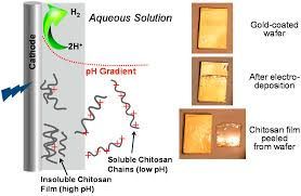 polymers free full text chitosan to connect biology to