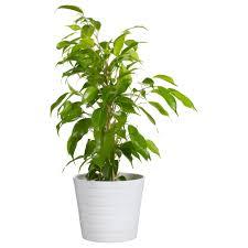 white flower pots white flower pots at ikea katy elliott clic