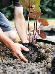 create a beautiful bog garden hgtv