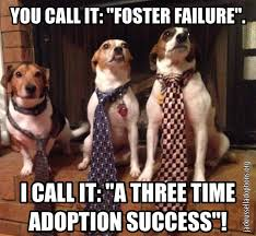 Adoption Meme - jack russell rescue memes georgia jack russell rescue adoption
