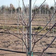 fiberglass tree stakes fence posts farmtek