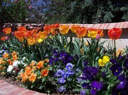 Xeriscape Landscaping Ideas Garden Design Garden Design With Garden Ideas Garden Flower