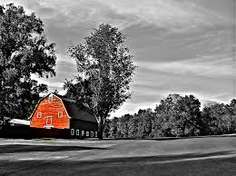 Black Barns Red Barn Black And White Photograph By Jean Wright