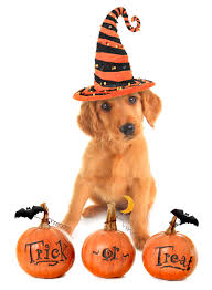 pets at halloween pet experts based in ireland