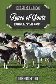 Backyard Cattle Raising Goat Breeds Chapter 1 Raising Goats Homestead Handbook