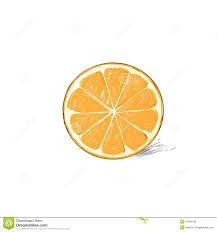 orange citrus fruit color sketch draw isolated stock vector