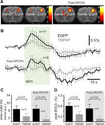 a critical role for purinergic signalling in the mechanisms