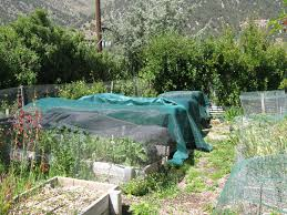 the backyard gardener agriculture and natural resources blogs
