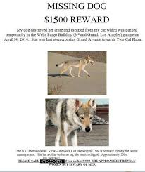 Lost Dog Meme - 1500 reward lost vlcak dog in la not a coyote not my dog owner